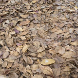 Autumn dry leaves fall Royalty Free Stock Photo