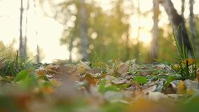 Autumn dry leaves falling on ground in autumn park in slowmotion. Beautiful autumn forest with sun shining. 1920x1080 stock video