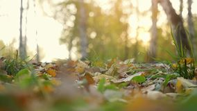 Autumn dry leaves falling on ground in autumn park in slowmotion. Beautiful autumn forest with sun shining. 1920x1080 stock footage