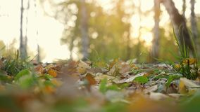 Autumn dry leaves falling on ground in autumn park in slowmotion. Beautiful autumn forest with sun shining. 1920x1080 stock video footage