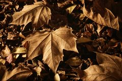 Dried autumn leaves on the ground stock photos