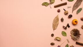 Autumn dry leaves and plant on pink background