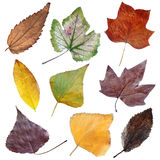 Autumn dry leaves set I Stock Photography
