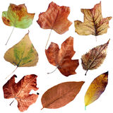 Autumn dry leaves set II Royalty Free Stock Images