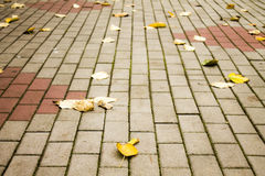 Autumn dry leaves Royalty Free Stock Images