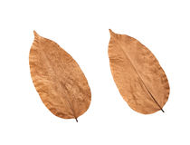 Autumn dry leaves texture background. Stock Photography