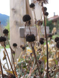 Autumn Dry meadow plants Royalty Free Stock Photography
