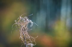 AUTUMN. Dry wild plant on the edge of a forest Royalty Free Stock Image