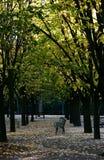 autumn du jardin卢森堡 免版税库存图片