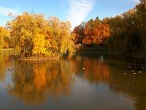 Autumn ducks. Stock Images