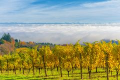 Autumn in Dundee Hills Wine Country. In the Dundee Hills Wine Country one rises above the fog for a spectacular view of the Willamette Valley.  The top of Mt Royalty Free Stock Photo