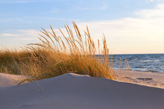 Autumn Dune Grass Stock Photography