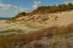 Autumn in the Dunes in Warren Dunes State Park Royalty Free Stock Images
