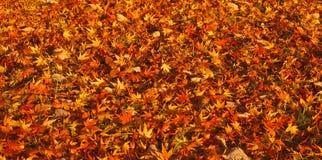 autumn dywan obraz royalty free