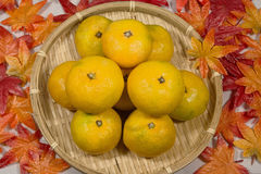 Autumn of early oranges of Japan. Early maturing oranges in Japan in the fall of taste stock photos