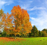 Autumn Elegy. Parting Royalty Free Stock Photography