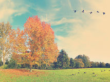 Autumn Elegy. Parting Stock Images