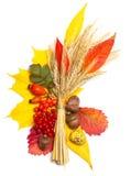 Autumn elements Stock Photo