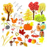 Autumn elements vector illustration
