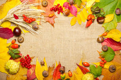 Autumn elements frame Stock Photography