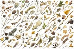 Autumn Elements met het Knippen van Wegen royalty-vrije stock foto