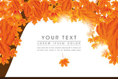 Autumn Elements Page Layout Design Stock Photos