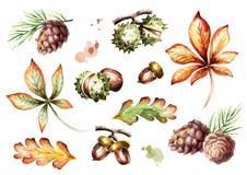 Autumn Elements Set Illustration d'aquarelle Illustration Libre de Droits
