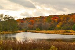 Autumn in Elver. View of Elver Park, Madison, WI on the most colorful day of the season Stock Images