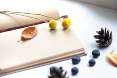 Autumn essentials Stock Image