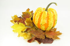 Autumn etude with pumpkin. Arrangement from dry fall coloured leaves and pumpkin over white background Stock Image