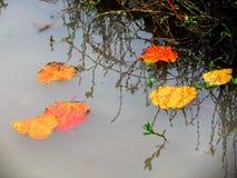 Autumn etudes Stock Images