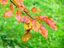Autumn etudes Royalty Free Stock Photography