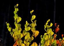 Autumn etudes Stock Photos