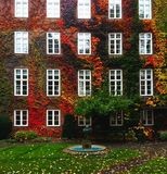 Autumn in Europe, house wall covered by leaves in various bright colours. House wall with windows and a fountain in front of it Royalty Free Stock Images