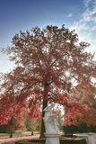 Autumn in Europe Royalty Free Stock Photo
