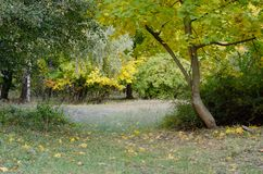 Autumn european park with maple and fir trees fulfilled by sun light Stock Images