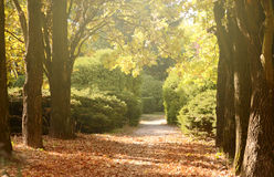 Autumn european park with oak and fir trees fulfilled by sun light Stock Images