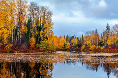 Autumn Evening Royalty Free Stock Photos
