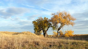 Autumn Evening with Cottonwood Trees Royalty Free Stock Images