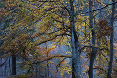 Autumn evening in forest Royalty Free Stock Photography