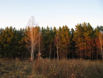Autumn. Evening in the autumn forest Stock Photo
