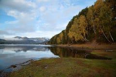Autumn Evening at Lake Teletskoye. Teletskoe lake, evening, autumn yellow birch on the bank Stock Photography
