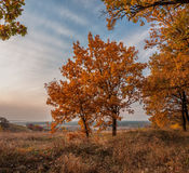 An autumn evening is in an oakery. An autumn evening is in an goldy oakery Royalty Free Stock Photos