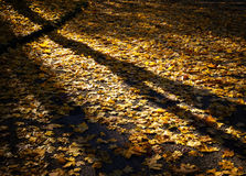 Autumn evening in park Royalty Free Stock Image