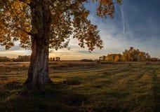 Autumn Evening. Quiet evening in early autumn stepi.Respublika Khakassia, East Siberia Stock Image
