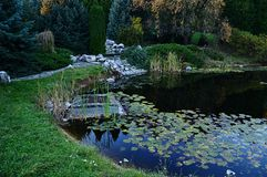 Autumn evening at water lilly pond with alpine garden, decorative trees and drain channel. Royalty Free Stock Image