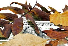 Autumn exchange rate. Money under the fallen autumn leaves stock images
