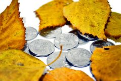 Autumn exchange rate. Money under the fallen autumn leaves royalty free stock photos