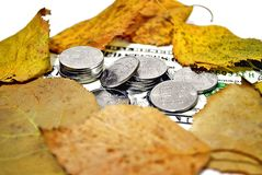 Autumn exchange rate. Money under the fallen autumn leaves royalty free stock image