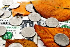 Autumn exchange rate. Money under the fallen autumn leaves stock photos